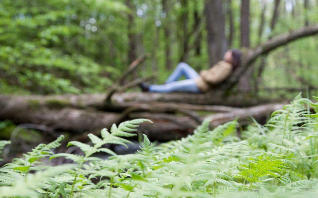 Nyrups Naturhotell aktiverar kroppens lugn- och rosignaler