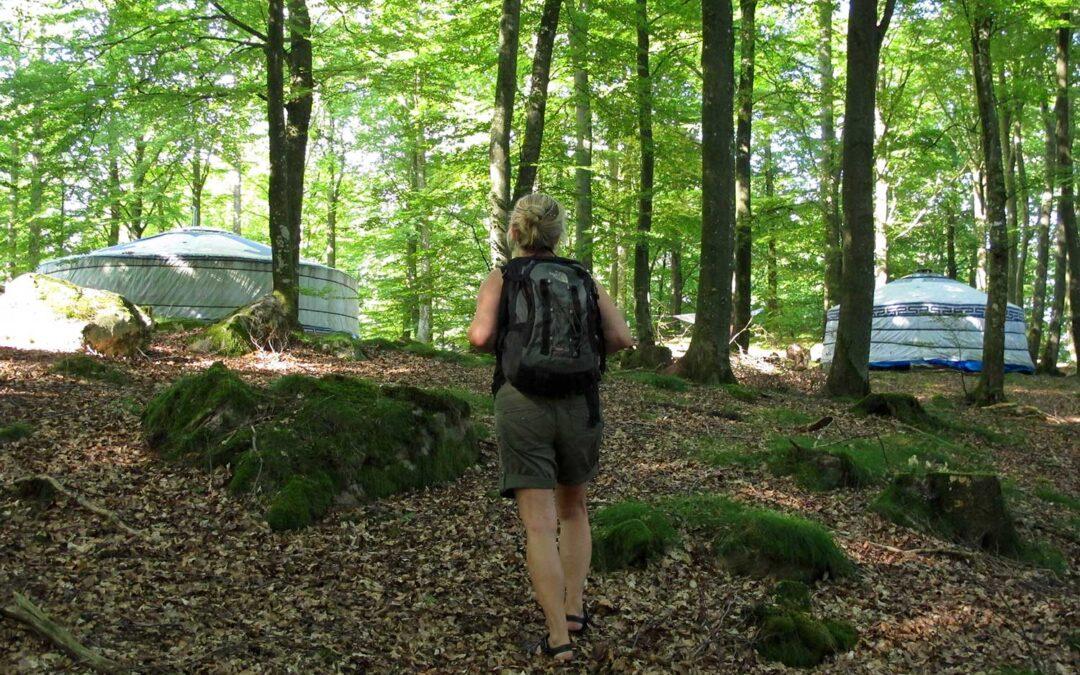 Bästa vägen till en stark och harmonisk vardag – Fem snabba effekter av skogsretreat